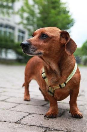 Hund-alt-Fritz-03-c-PETA-D.jpg